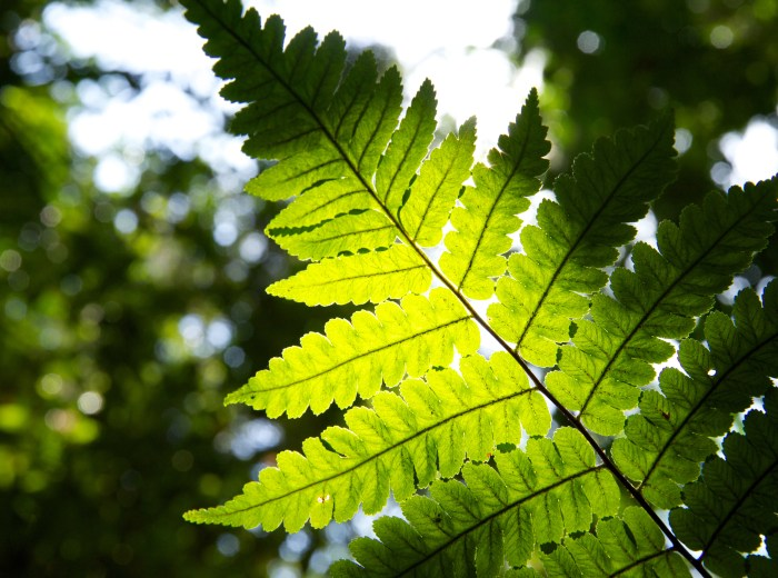 A close-up of a fern in a forest in Central Kalimantan.