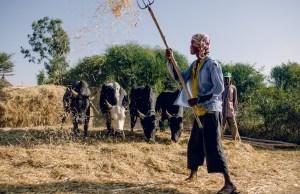 Ag Landscape Ethiopia
