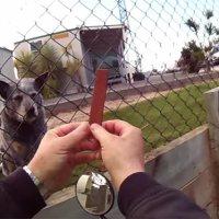 Postbote vs. Hunde