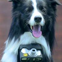 Grizzler, der fotografierende Hund