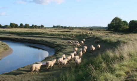 Vue sur la propriété - Balade sur les marais