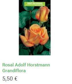Rosal Adolf Horstmann