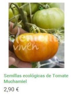 Semillas ecológicas de Tomate Muchamiel
