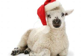 Shepherd's Holiday Pie!