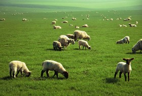 The Film Pasture: Grazing with Podcasters Vol 2.