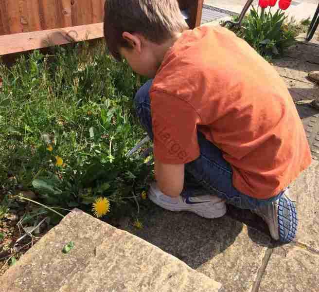 Sid gardening