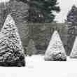 Jardin d'hiver, ifs sous la neige