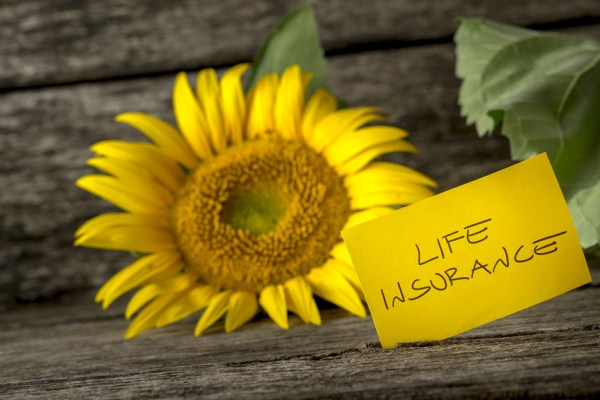 Life insurance concept with a colorful sunflower