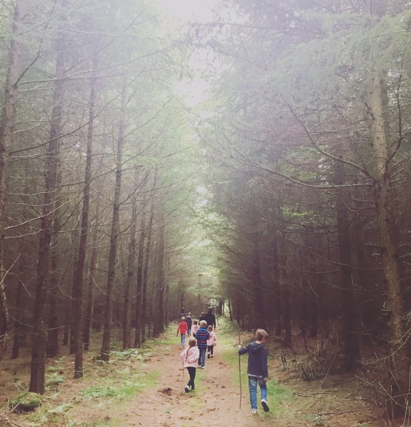 Jollydays Walking Through Woods