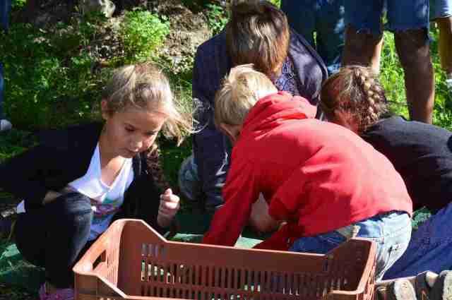 putting olives into basket