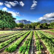 Coltivazione di verdura biologica