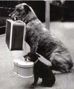 dogs with suitcases