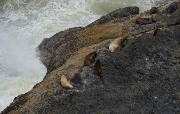 Sea lions lounge on rocks along the Oregon coast