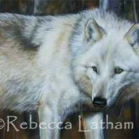 White Wolf Painting