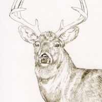 Whitetail Buck Painting