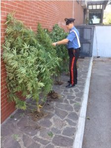 marijuana-carabinieri-sequestro