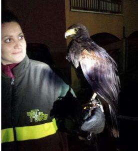 falco-angela-vigili-fuoco