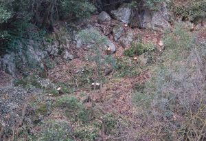 alberi-tagliati-bosco