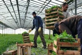 Fondi, 500 braccianti indiani si fermano ancora