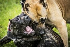 Animali maltrattati, Latina è tra le province più colpite in Italia