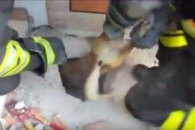 VIDEO I vigili del fuoco salvano il cane Spillo incastrato nel solaio da 4 giorni