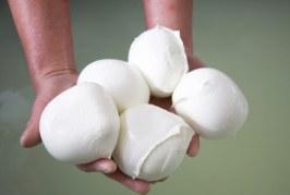 Congelare la mozzarella di bufala? Scoppia la protesta dei produttori pontini
