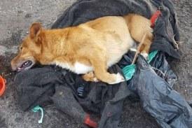 Arrestato il responsabile della morte di Lucky: maltrattava anche i familiari