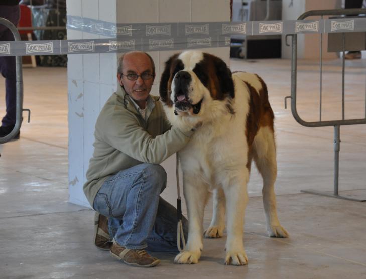 concorso-bellezza-cani-latina-14