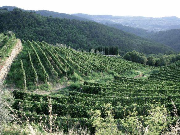 do it in a vineyard - on my naughty travel bucket list!