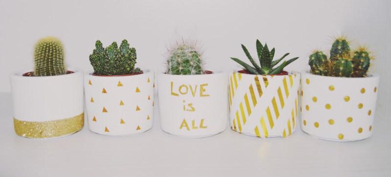 cactus-noel