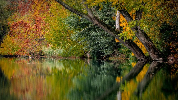 3 things I love about autumn - picture on autumnal trees and lake