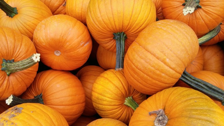 5 other things you can do with a pumpkin