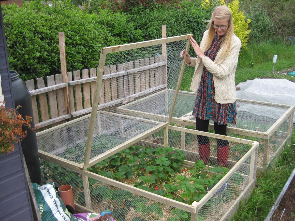 Building A Raised Bed Orchard