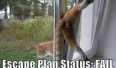 A funny picture of cat stuck between a window. Escape Plan Status: Fail.