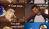 An Oh, You dog meme. Knock Knock! Who's there? I eat mop. I eat mop who? You eat your poo?! Oh, You!