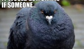 i-see-you-washed-your-car-it-would-be-a-shame-if-someone-crapped-on-it-pigeon-bird-meme