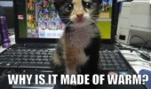 if-not-for-sits-why-is-it-made-of-warm-lol-cat-kitten-laptop-meme