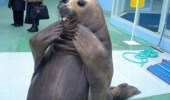 A funny seal with its hands on its face. Oh my God, that is the cutest dress.