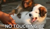 please-sir-no-touching-of-the-dog-monkey-dog-meme