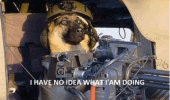 i-have-no-idea-what-i-am-doing-tank-dog-meme