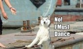 scruffy-get-back-here-no-i-must-dance-dog-dancing-meme