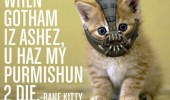 when-gotham-iz-ashez-u-haz-my-purmishun-2-die-bane-kitty-batman-dark-knight-rises-cat-meme