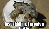 rawr-just-kidding-im-only-a-turtle-egg-hatching-meme