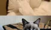 "A funny picture of a cat saying ""Do you want to know something funny?"" and a grumpy cat saying ""Nope."""
