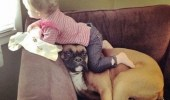 life-hasnt-been-quiet-the-same-for-our-boxer-since-daughter-was-born-dog-meme