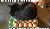 A funny meme of a black cat sitting on top of eggs.