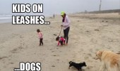 Meanwhile in a parallel universe, kids on leashes... ... Dogs run wild.