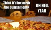 A dogs waiting to eat pizza.