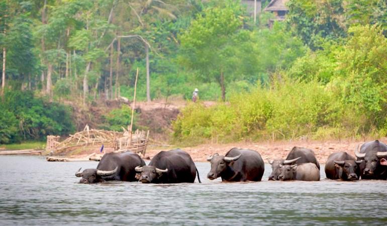 Voyage nature au Laos avec Aurélie