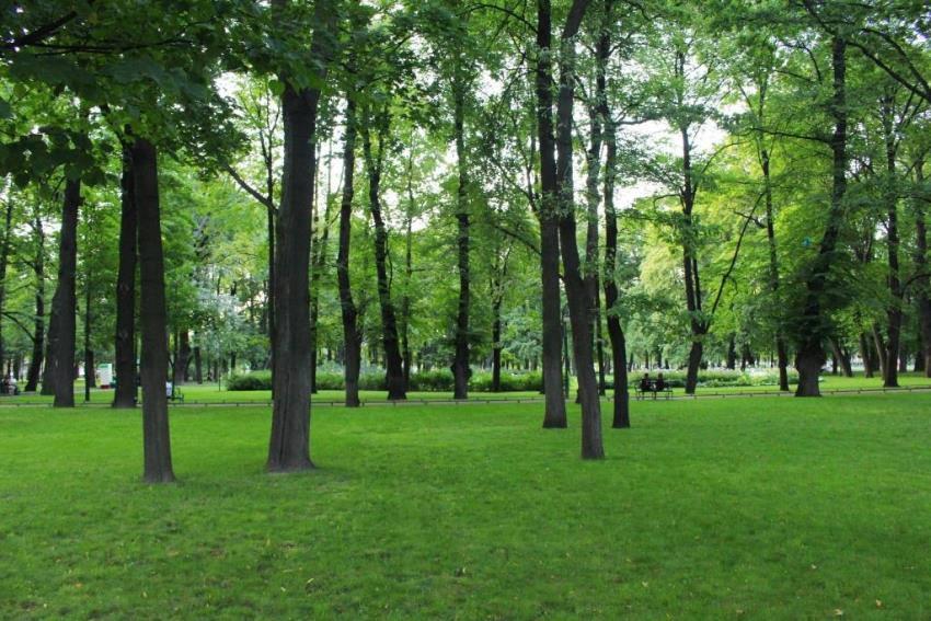 live near trees